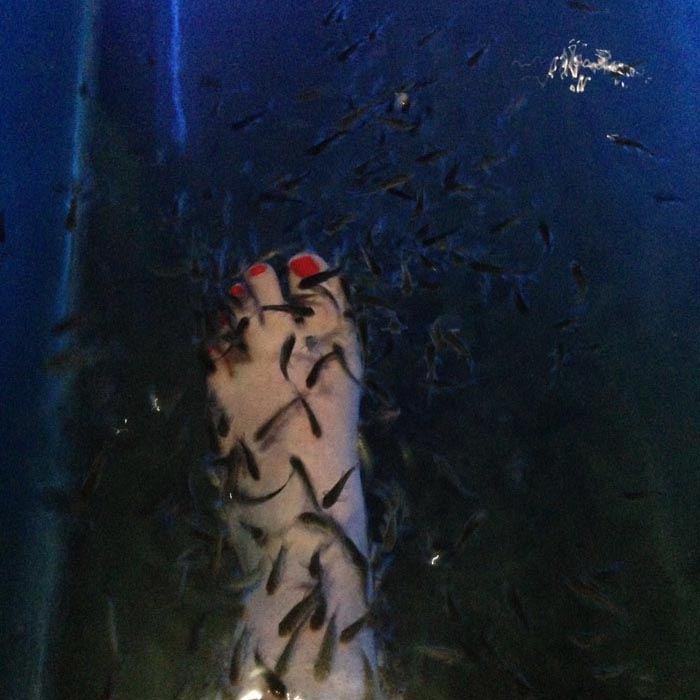 Fish Teraphy a Bali