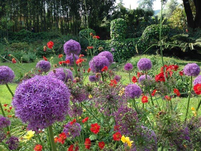 Heller Garden fiori
