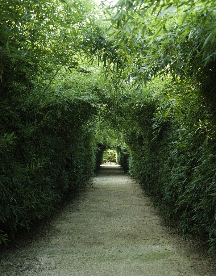 Labirinto della Masone di Fontanellato, Parma