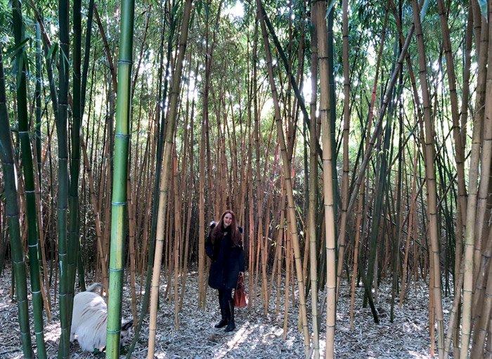 Labirinto della Masone di Fontanellato i bambù
