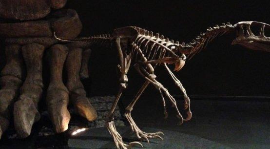 mudec dinosauri